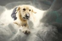 Usa, cade nella neve, il suo cane lo salva abbaiando per 20 ore e riscaldandolo con il corpo