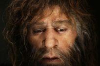 Les Néandertaliens prenaient-ils de l'aspirine?