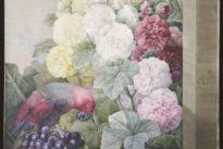 Pierre-Joseph Redouté, floraisons du plus fort