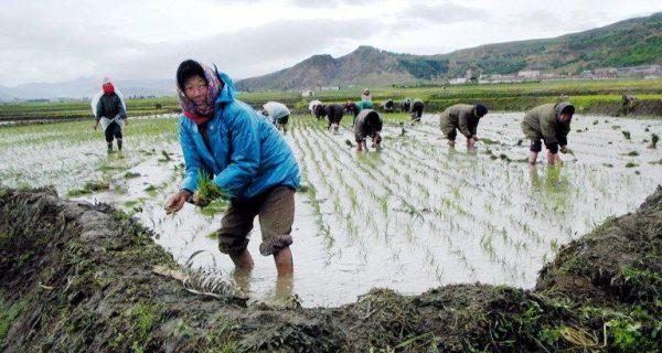 En Corée du Nord, «la population a énormément de besoins»