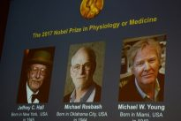 Le prix Nobel de médecine attribué à trois spécialistes de l'horloge biologique