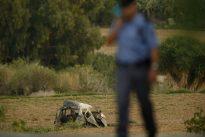A Malte, la blogueuse anticorruption Daphne Caruana Galizia assassinée
