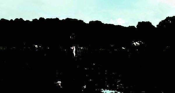 «Normandie nue», pénible effeuillage dans le bocage