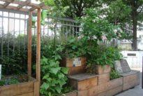 Chez les Gens de Cottin, on fait d'une rue un jardin…
