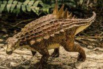 Un cousin de l'ankylosaure découvert au Mexique
