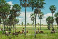 «Zama», l'envers des tropiques