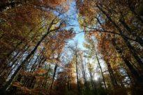«Les sols contiennent environ 2000 milliards de tonnes de carbone»
