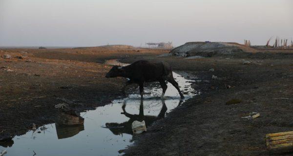 En Irak, des marais assoiffés etdesfermiers désemparés