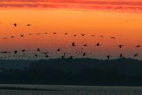 Pollution lumineuse:«Les oiseaux sont totalement désorientés dès lors qu'ils s'approchent de nos villes»