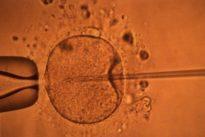 Accès aux origines ettests ADN: desscandalesàvenir?