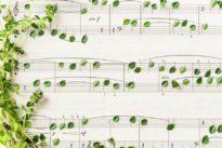 La vie sonore desplantes